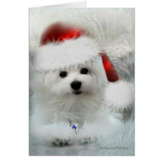 Hermes the Maltese Christmas Card