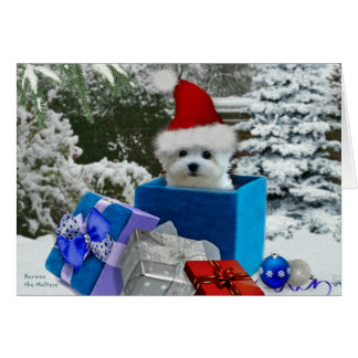Hermes the Maltese Christmas Greeting Card