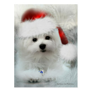 Hermes the Maltese Postcard