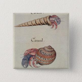 Hermit Crab 15 Cm Square Badge