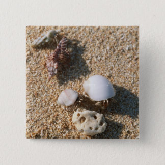 Hermit crab 15 cm square badge