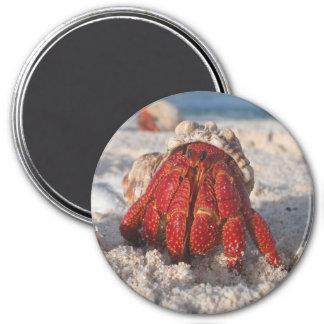 Hermit Crab 7.5 Cm Round Magnet