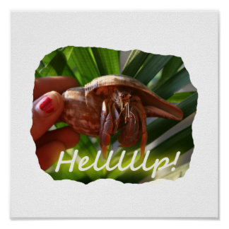 Hermit Crab and Help text , funny animal design Poster