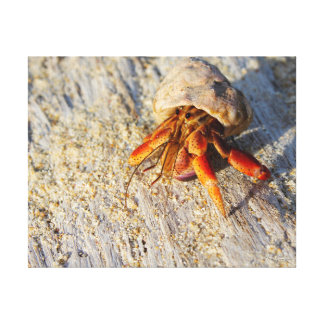 Hermit Crab Gallery Wrapped Canvas