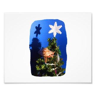 Hermit Crab Climbing Down the Christmas Tree Photographic Print