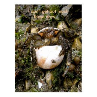 Hermit Crab, Dutch Harbor, Alaska Postcard