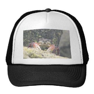 Hermit Crab Mesh Hats