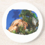 Hermit Crab in Tree blue background cutout Beverage Coasters