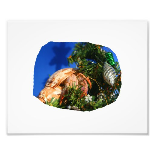 Hermit Crab in Tree blue background cutout Photo Art