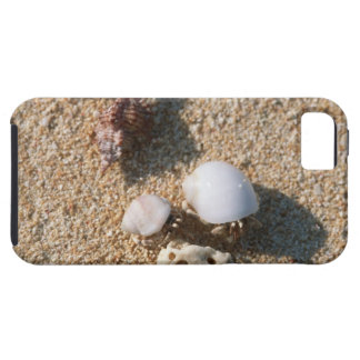 Hermit crab iPhone 5 cases