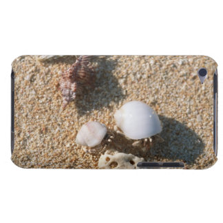 Hermit crab iPod touch cases