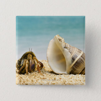 Hermit crab looking at larger shell 15 cm square badge