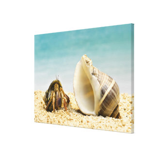 Hermit crab looking at larger shell stretched canvas prints