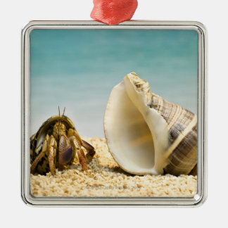 Hermit crab looking at larger shell christmas ornament