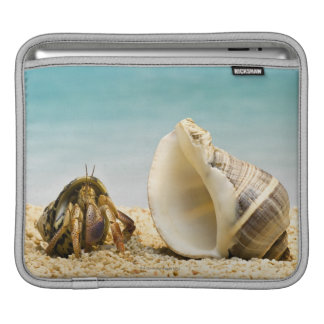 Hermit crab looking at larger shell iPad sleeve