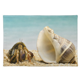 Hermit crab looking at larger shell placemat