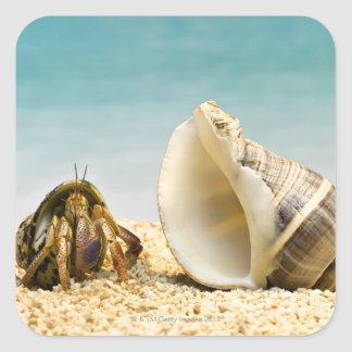 Hermit crab looking at larger shell square sticker