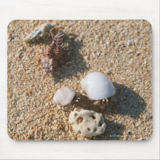 Hermit crab mouse mat