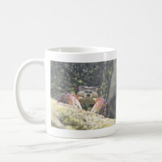 Hermit Crab Mugs