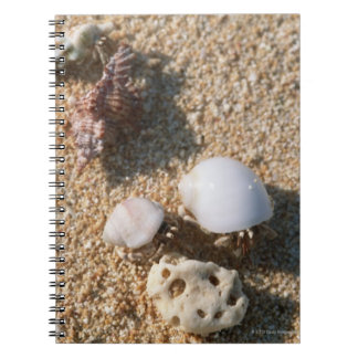 Hermit crab notebook