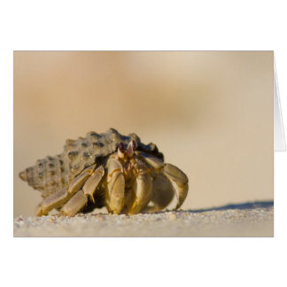 Hermit Crab on white sand beach of Isla Carmen, Card