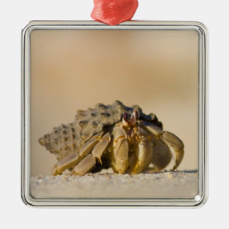 Hermit Crab on white sand beach of Isla Carmen, Christmas Ornament
