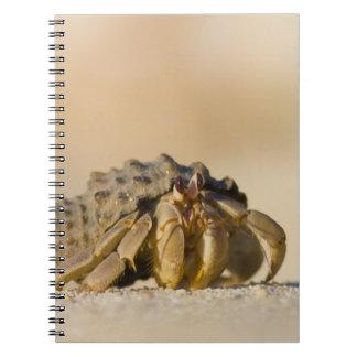 Hermit Crab on white sand beach of Isla Carmen, Notebook