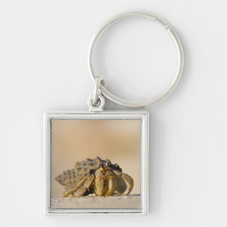 Hermit Crab on white sand beach of Isla Carmen, Silver-Colored Square Key Ring