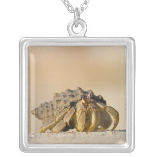 Hermit Crab on white sand beach of Isla Carmen, Silver Plated Necklace