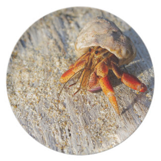 Hermit Crab Plate