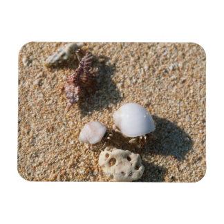 Hermit crab rectangular photo magnet