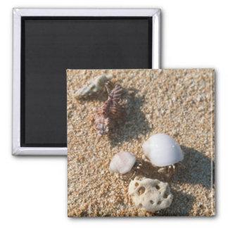 Hermit crab square magnet