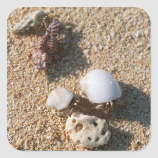 Hermit crab square sticker