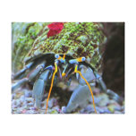 Hermit Crab - The Reef Collection Stretched Canvas Print