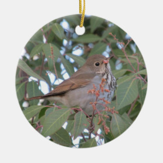 Hermit Thrush Christmas Ornament