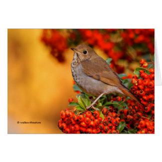 Hermit Thrush on the Scarlet Firethorn Card