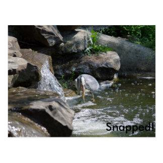 Heron #01: Snapped! Postcard