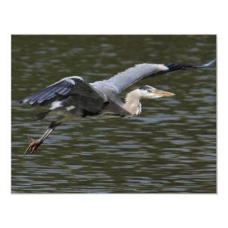 Heron Fly Past 11 Cm X 14 Cm Invitation Card