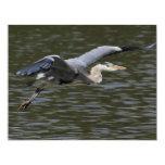 Heron Fly Past Custom Invites