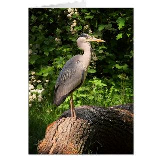 Heron • Greeting Card