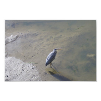 Heron Hunting In St Andrews Harbour Art Photo