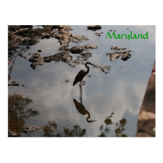 Heron in canal postcard