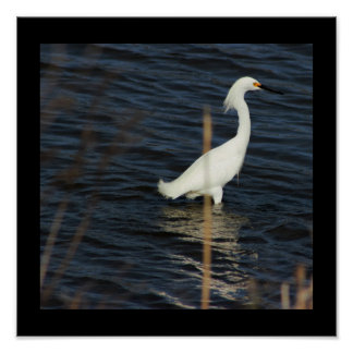 Heron in Water Poster