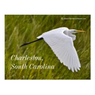 Heron of Charleston Postcard