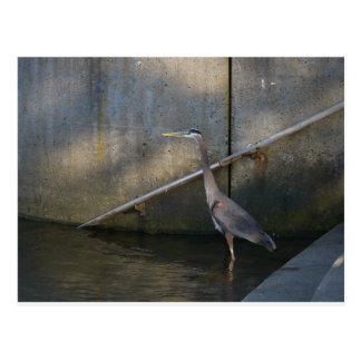Heron on the steps postcard