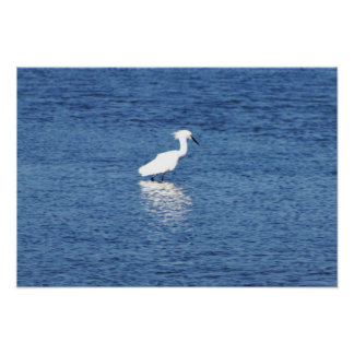 Heron on the Water Poster