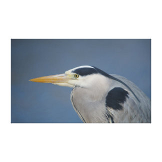 Heron Portrait Canvas Print