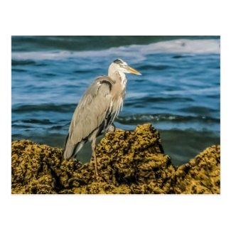 Heron Postcard