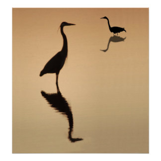 Heron Silouette Poster