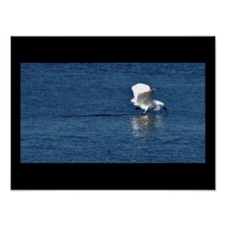 Heron Spreads it's Wings Poster